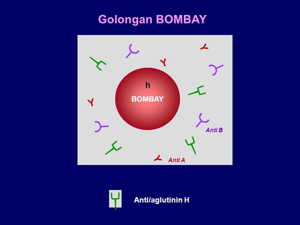 Golongan BOMBAY Y Y BOMBAY h Y Anti B Y Anti A Anti/aglutinin H