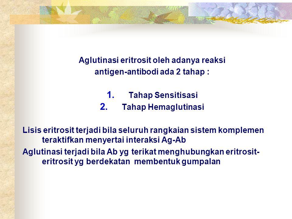 Aglutinasi eritrosit oleh adanya reaksi antigen-antibodi ada 2 tahap :