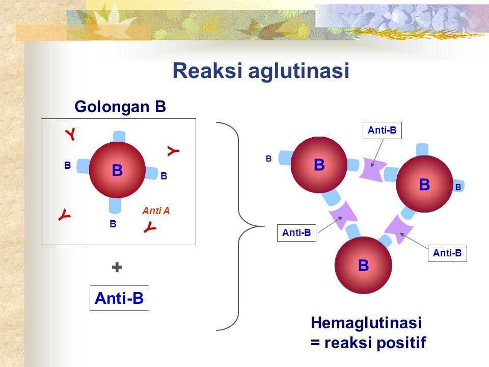 Reaksi aglutinasi + Golongan B Y Y B B B Y Y B Anti-B Hemaglutinasi