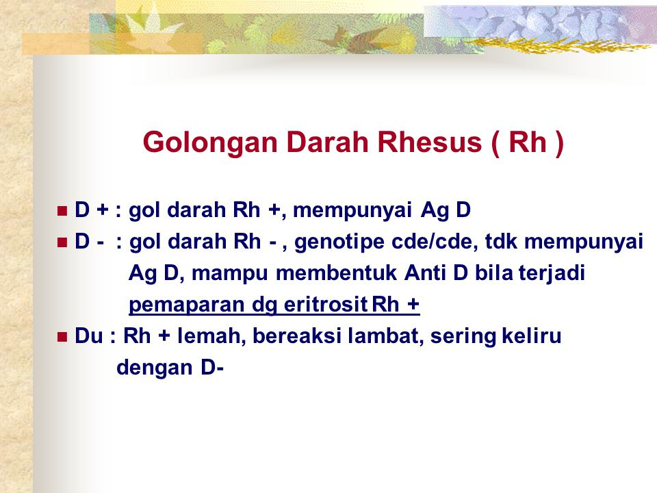 Golongan Darah Rhesus ( Rh )