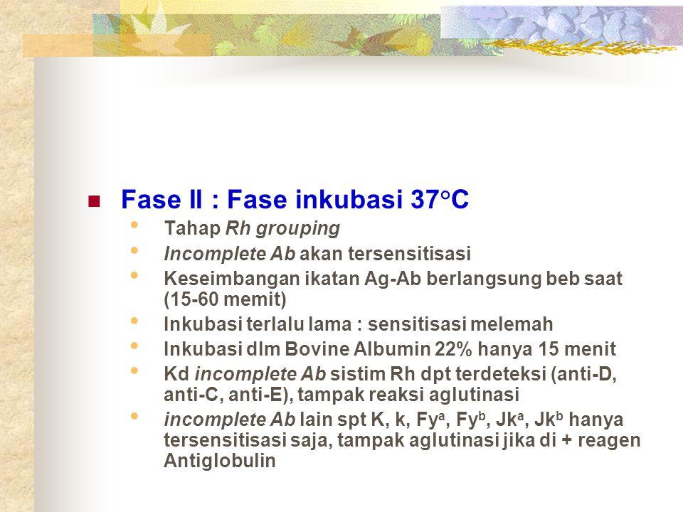 Fase II : Fase inkubasi 37°C
