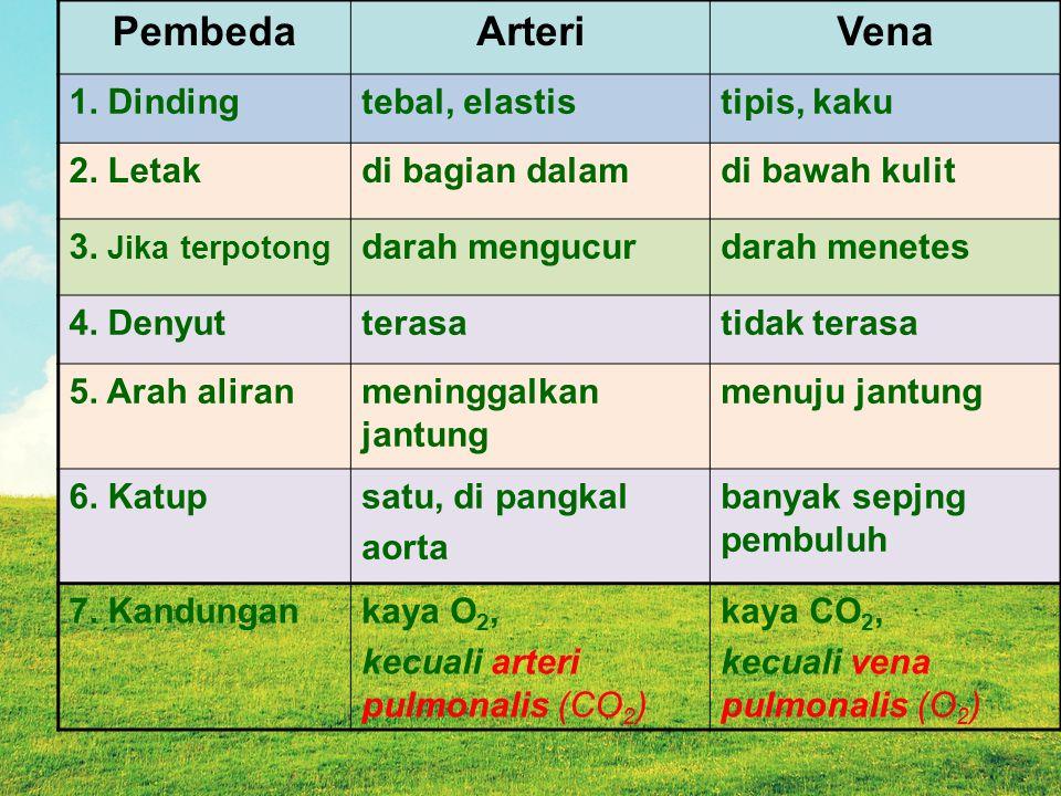 Pembeda Arteri Vena 1. Dinding tebal, elastis tipis, kaku 2. Letak