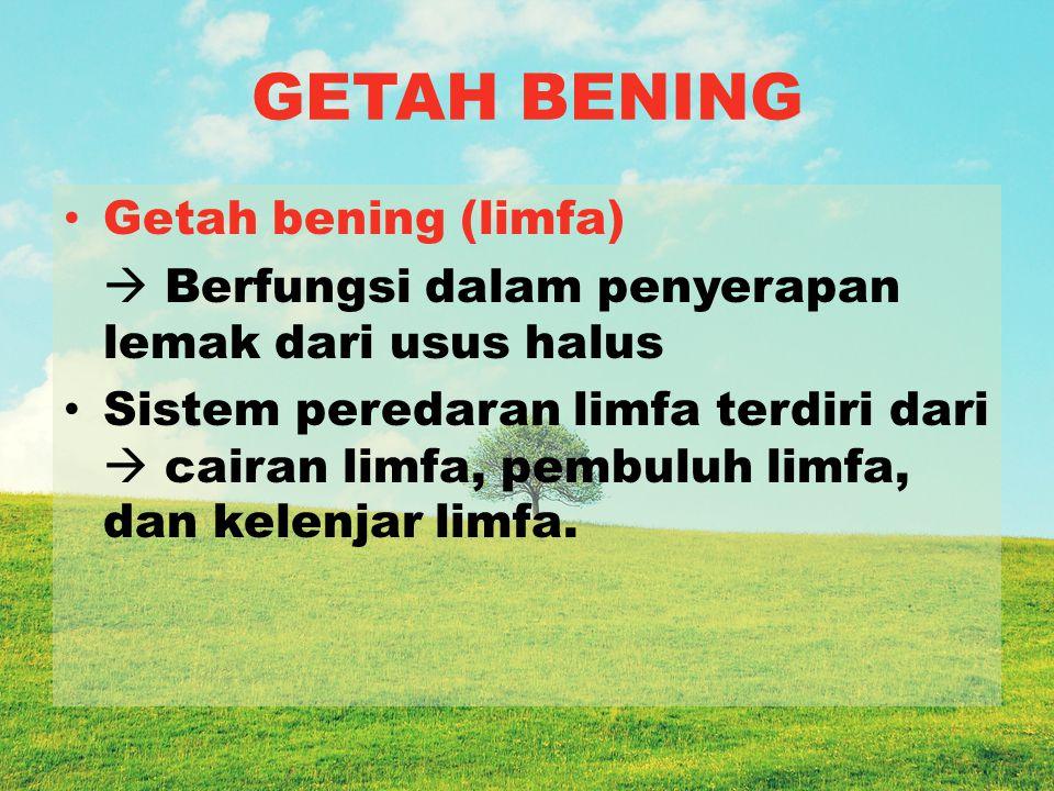 GETAH BENING Getah bening (limfa)