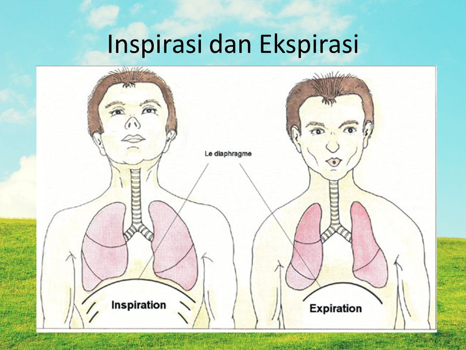 Inspirasi dan Ekspirasi