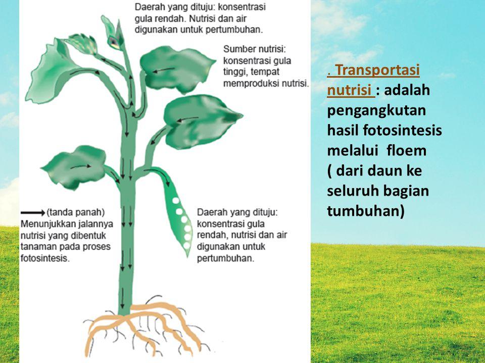 . Transportasi nutrisi : adalah pengangkutan hasil fotosintesis melalui floem