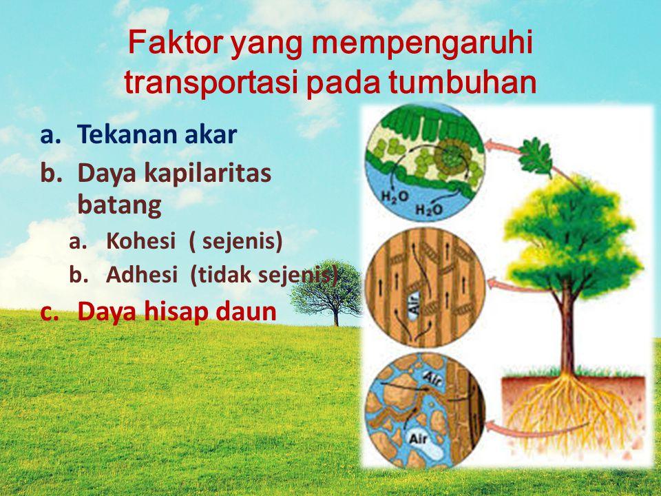 Faktor yang mempengaruhi transportasi pada tumbuhan