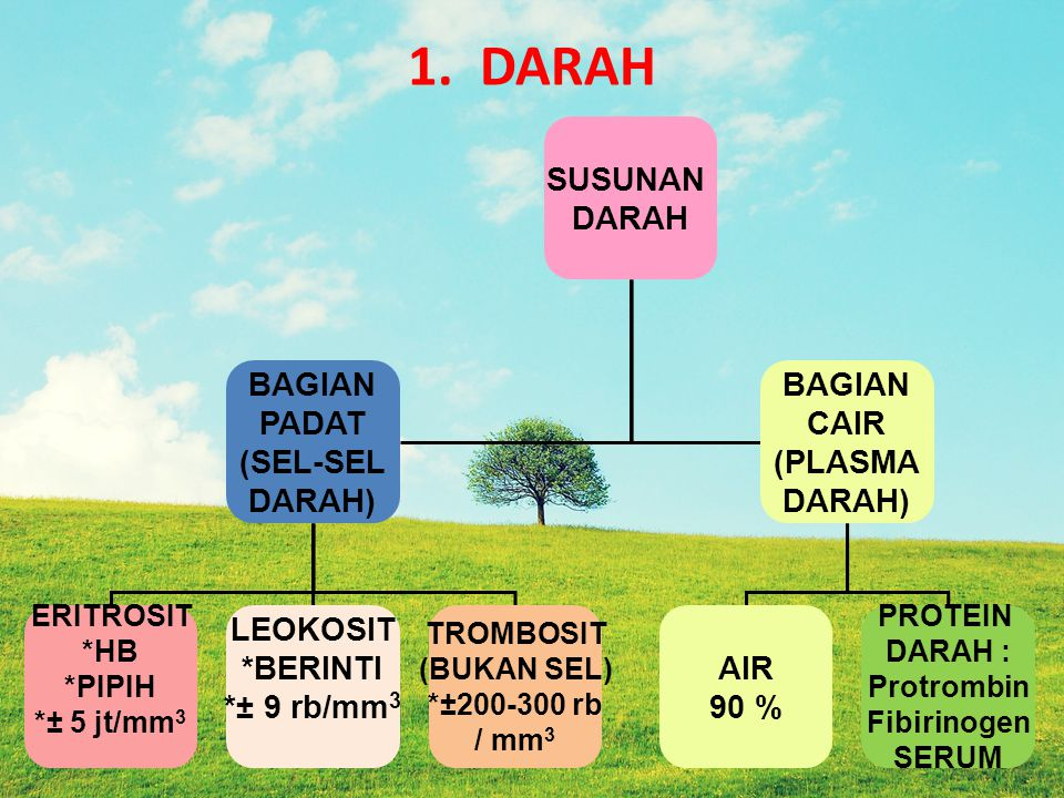 1. DARAH SUSUNAN DARAH BAGIAN PADAT (SEL-SEL DARAH) CAIR (PLASMA