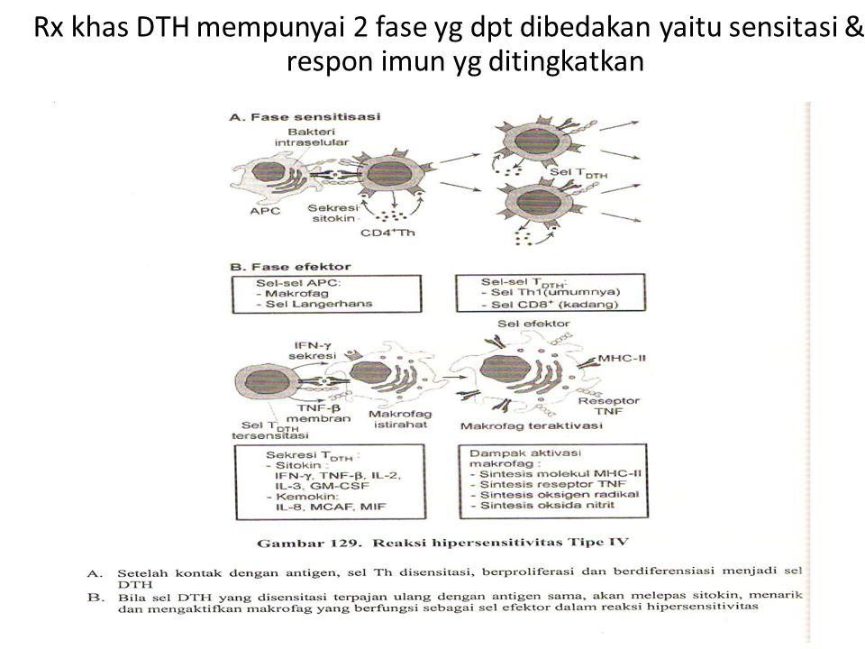 Rx khas DTH mempunyai 2 fase yg dpt dibedakan yaitu sensitasi & respon imun yg ditingkatkan