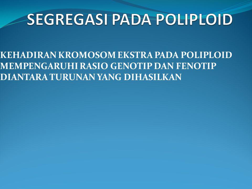 SEGREGASI PADA POLIPLOID