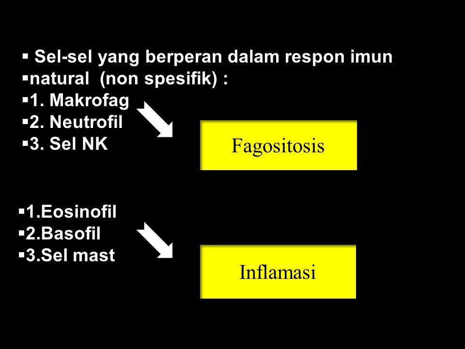 Fagositosis Inflamasi Sel-sel yang berperan dalam respon imun