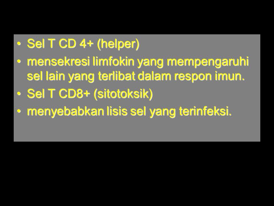 Sel T CD 4+ (helper) mensekresi limfokin yang mempengaruhi sel lain yang terlibat dalam respon imun.