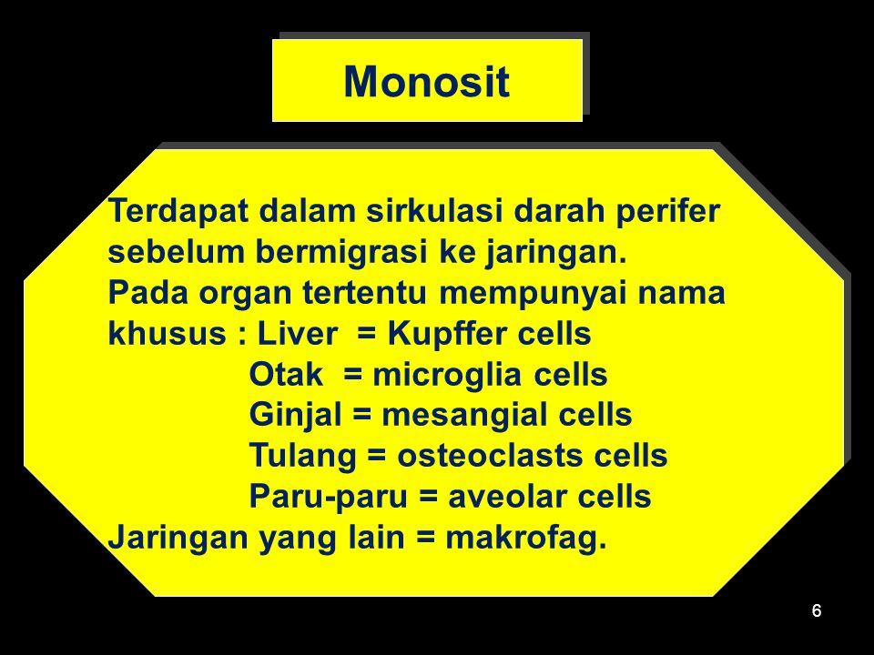 Monosit Terdapat dalam sirkulasi darah perifer