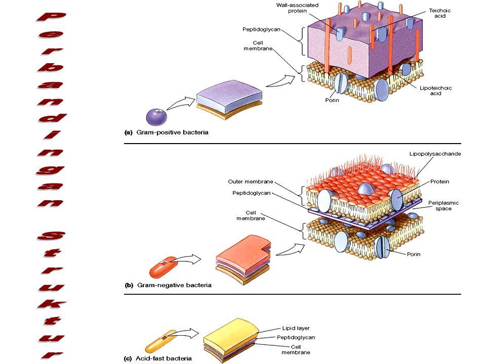 Perbandingan Struktur