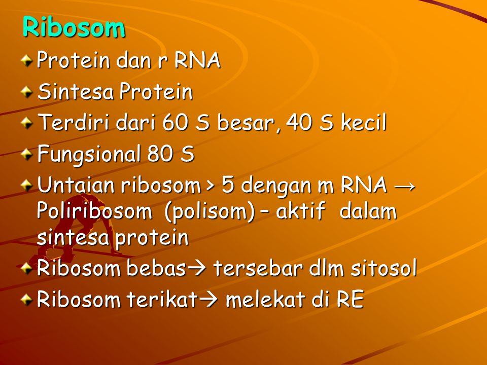 Ribosom Protein dan r RNA Sintesa Protein