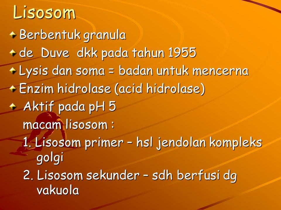 Lisosom Berbentuk granula de Duve dkk pada tahun 1955