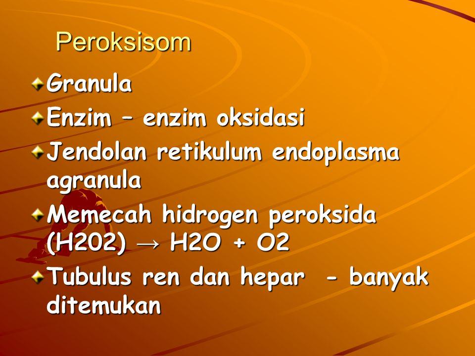 Peroksisom Granula Enzim – enzim oksidasi