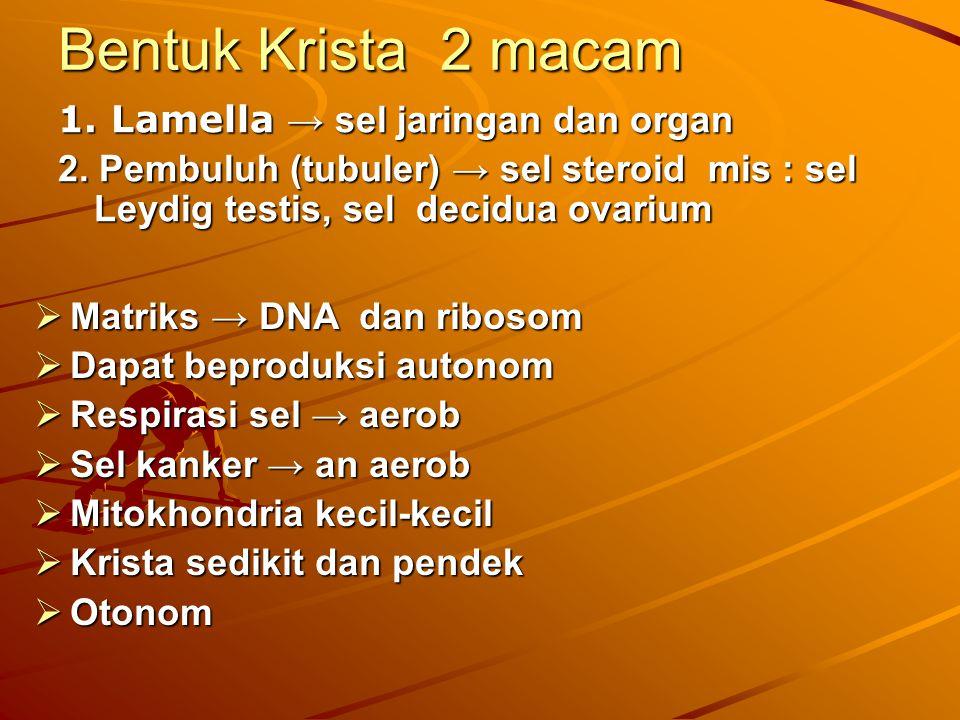 Bentuk Krista 2 macam 1. Lamella → sel jaringan dan organ