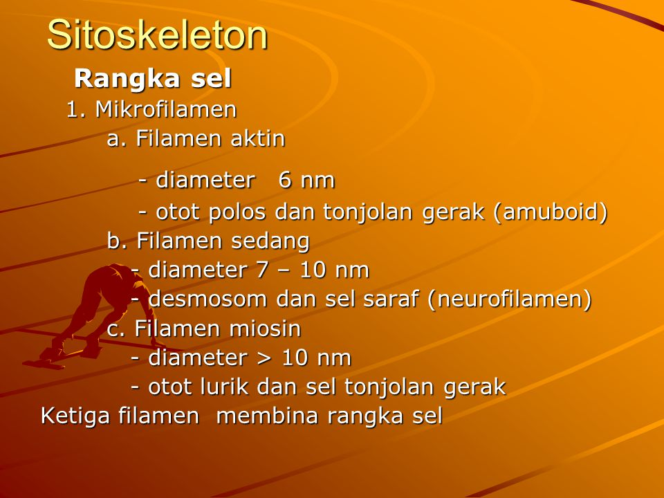 Sitoskeleton Rangka sel 1. Mikrofilamen a. Filamen aktin