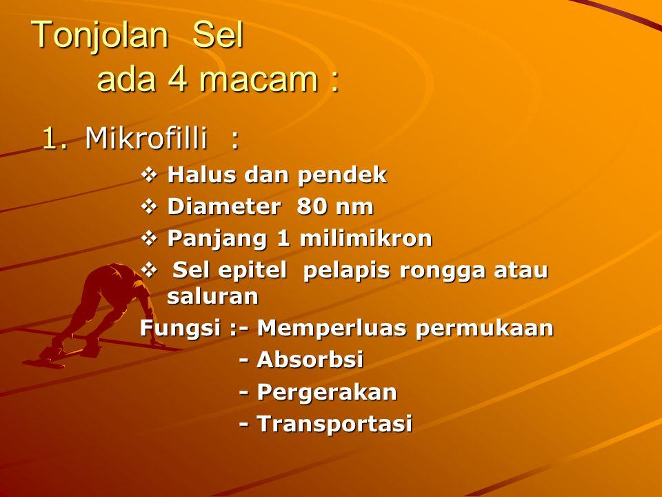 Tonjolan Sel ada 4 macam :
