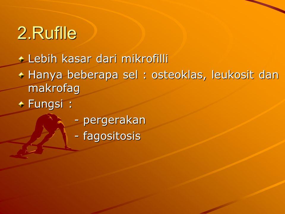 2.Ruflle Lebih kasar dari mikrofilli