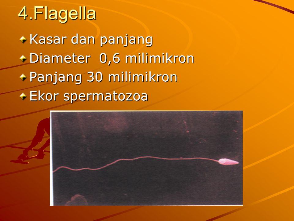 4.Flagella Kasar dan panjang Diameter 0,6 milimikron