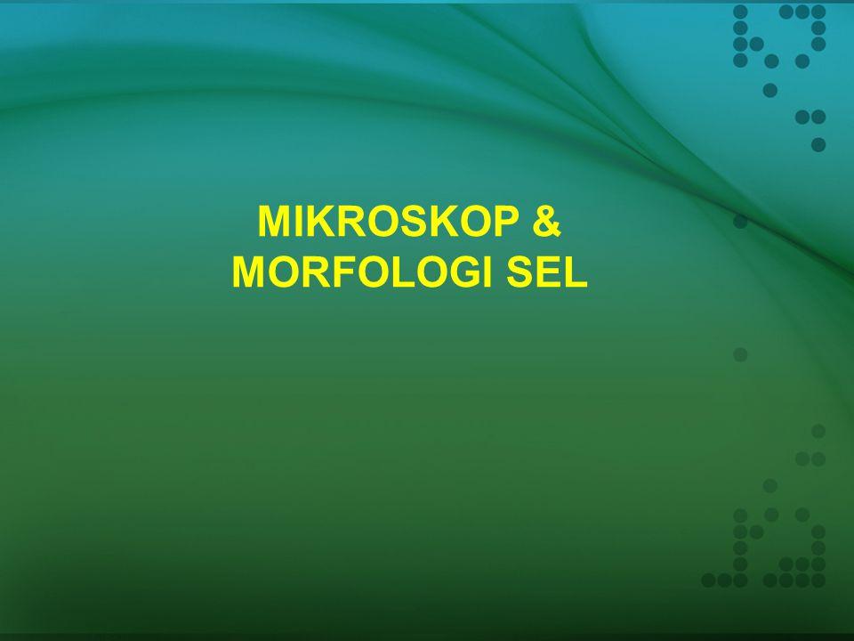 MIKROSKOP & MORFOLOGI SEL