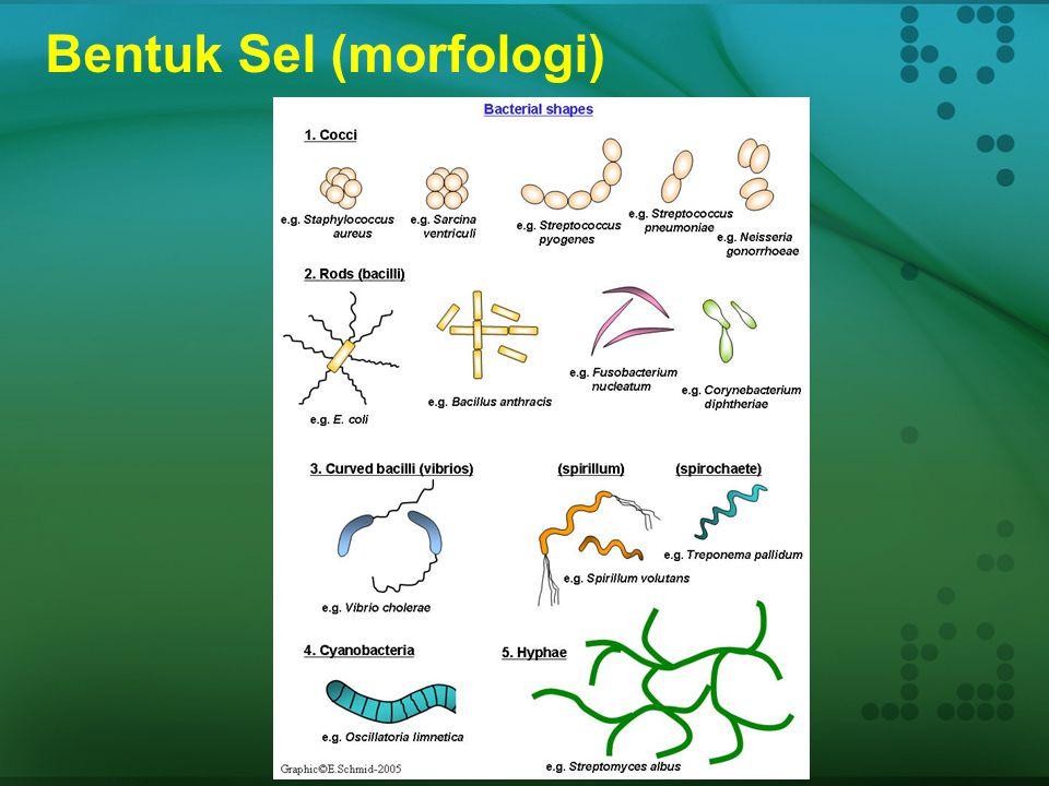 Bentuk Sel (morfologi)
