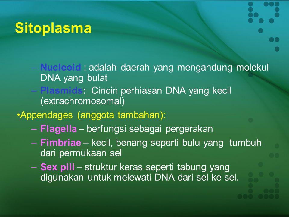 Sitoplasma Nucleoid : adalah daerah yang mengandung molekul DNA yang bulat. Plasmids: Cincin perhiasan DNA yang kecil (extrachromosomal)