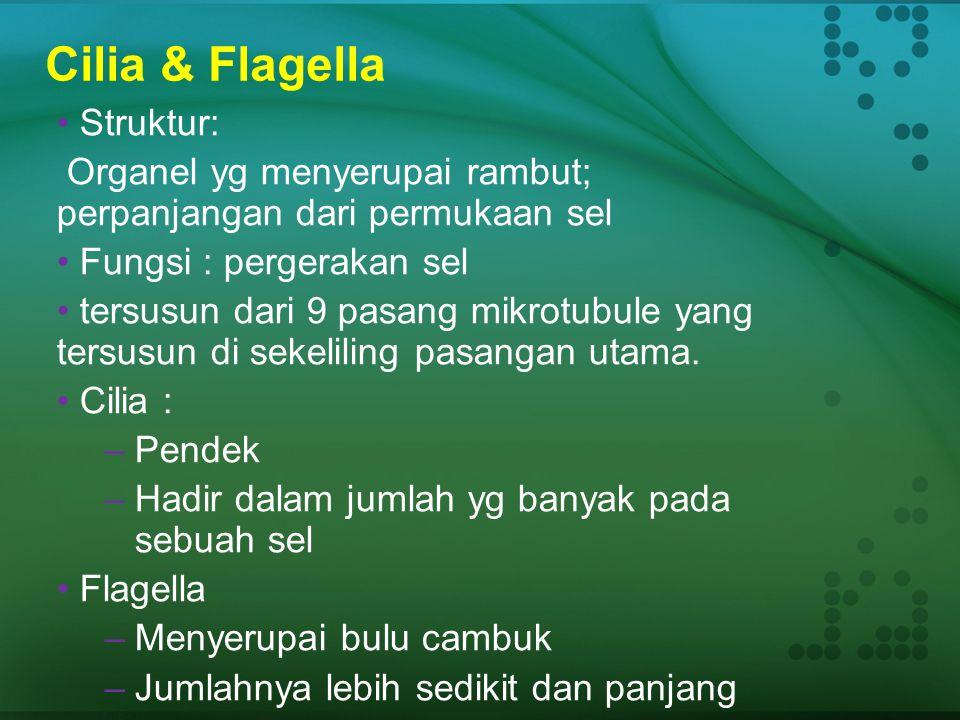 Cilia & Flagella Struktur: