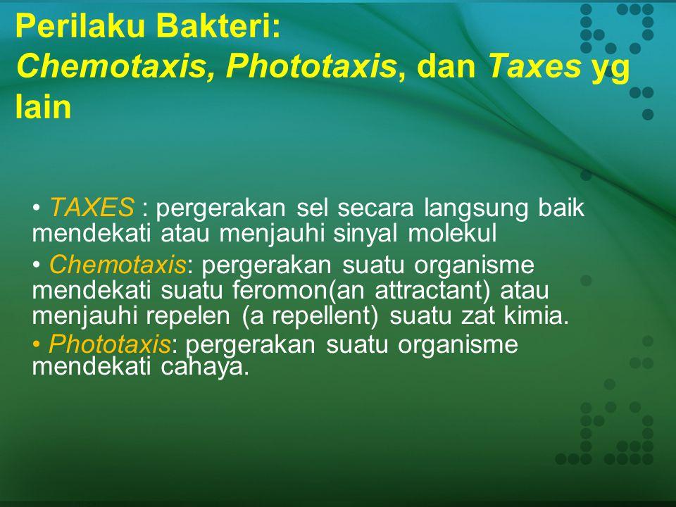 Perilaku Bakteri: Chemotaxis, Phototaxis, dan Taxes yg lain