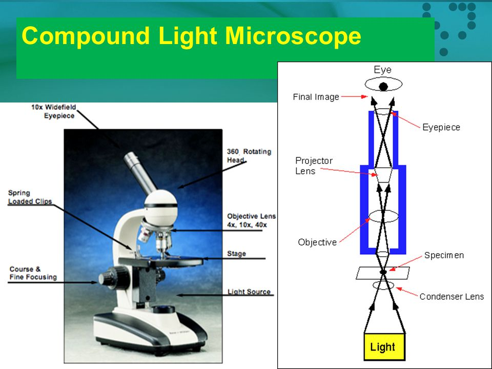 Compound Light Microscope