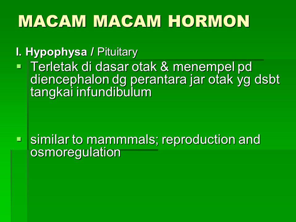 MACAM MACAM HORMON I. Hypophysa / Pituitary. Terletak di dasar otak & menempel pd diencephalon dg perantara jar otak yg dsbt tangkai infundibulum.
