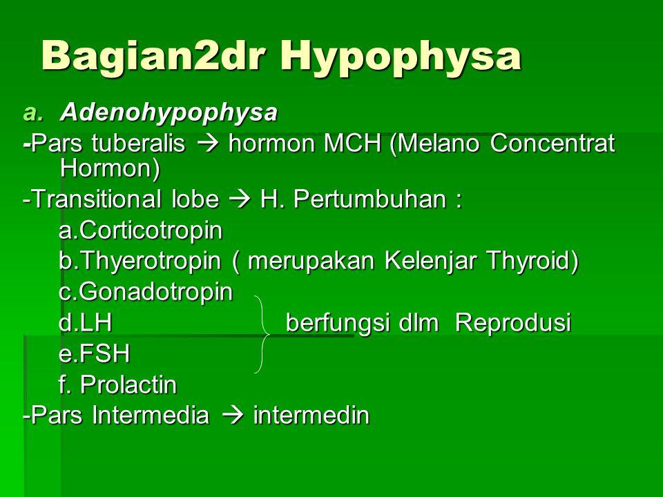 Bagian2dr Hypophysa Adenohypophysa