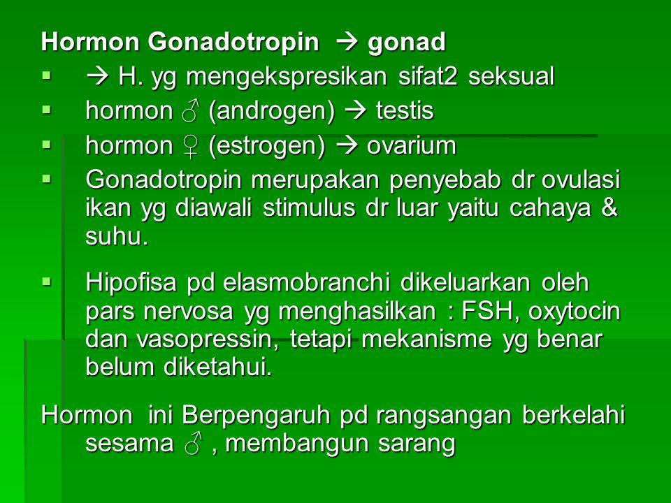 Hormon Gonadotropin  gonad