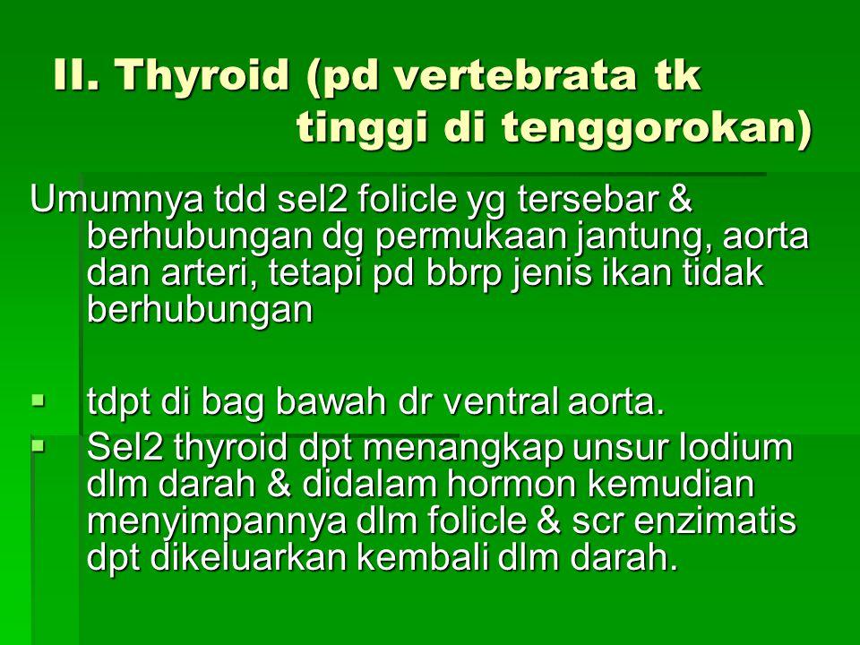II. Thyroid (pd vertebrata tk tinggi di tenggorokan)