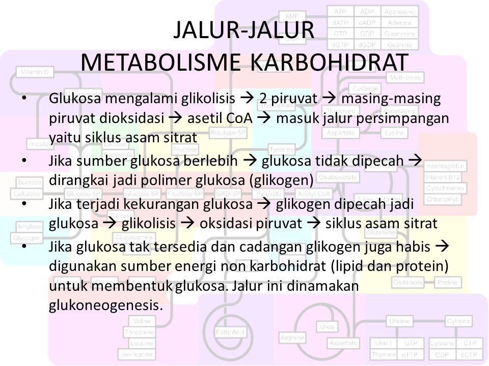 JALUR-JALUR METABOLISME KARBOHIDRAT