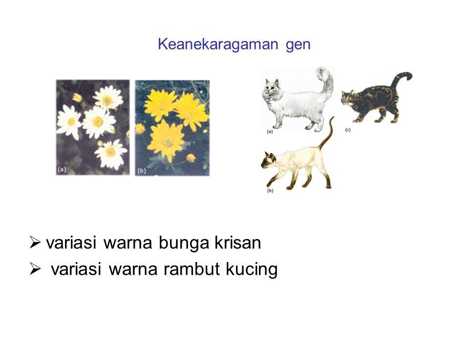 variasi warna bunga krisan variasi warna rambut kucing