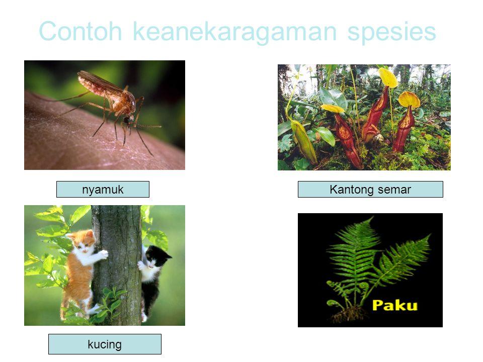 Contoh keanekaragaman spesies