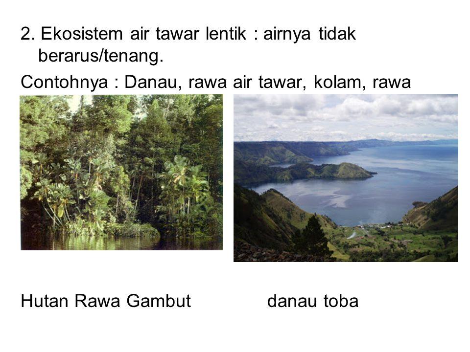 2. Ekosistem air tawar lentik : airnya tidak berarus/tenang