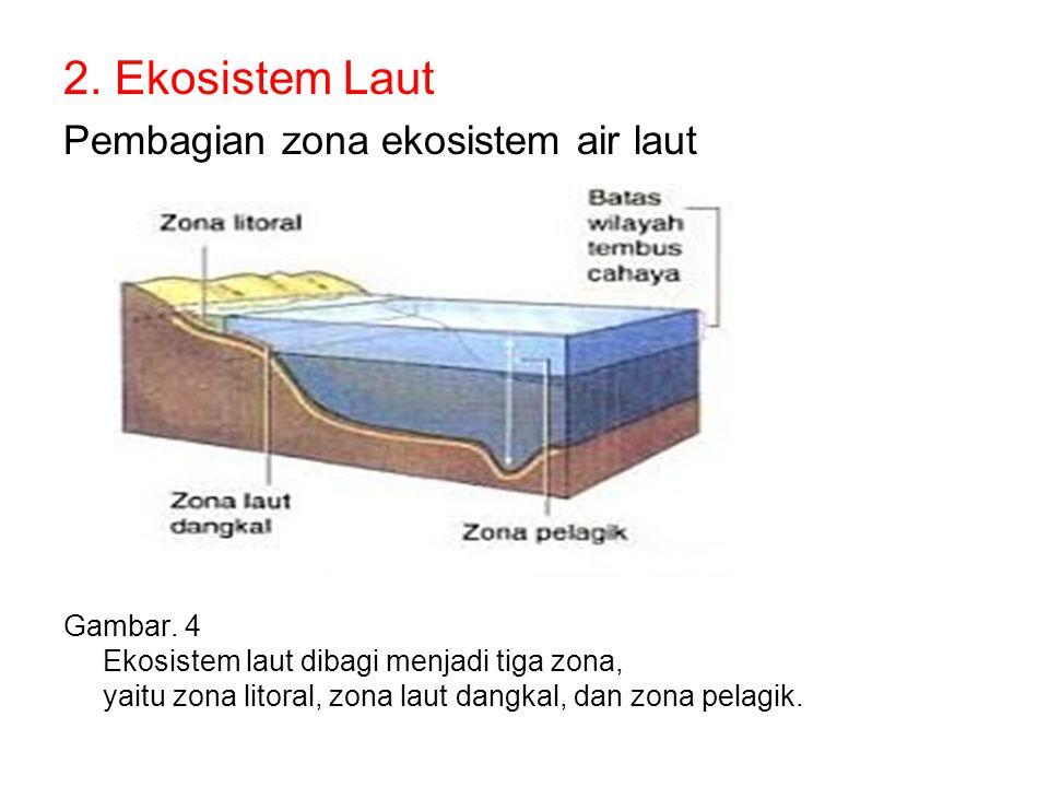 2. Ekosistem Laut Pembagian zona ekosistem air laut