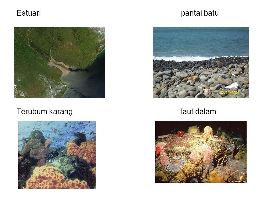 Estuari pantai batu Terubum karang laut dalam
