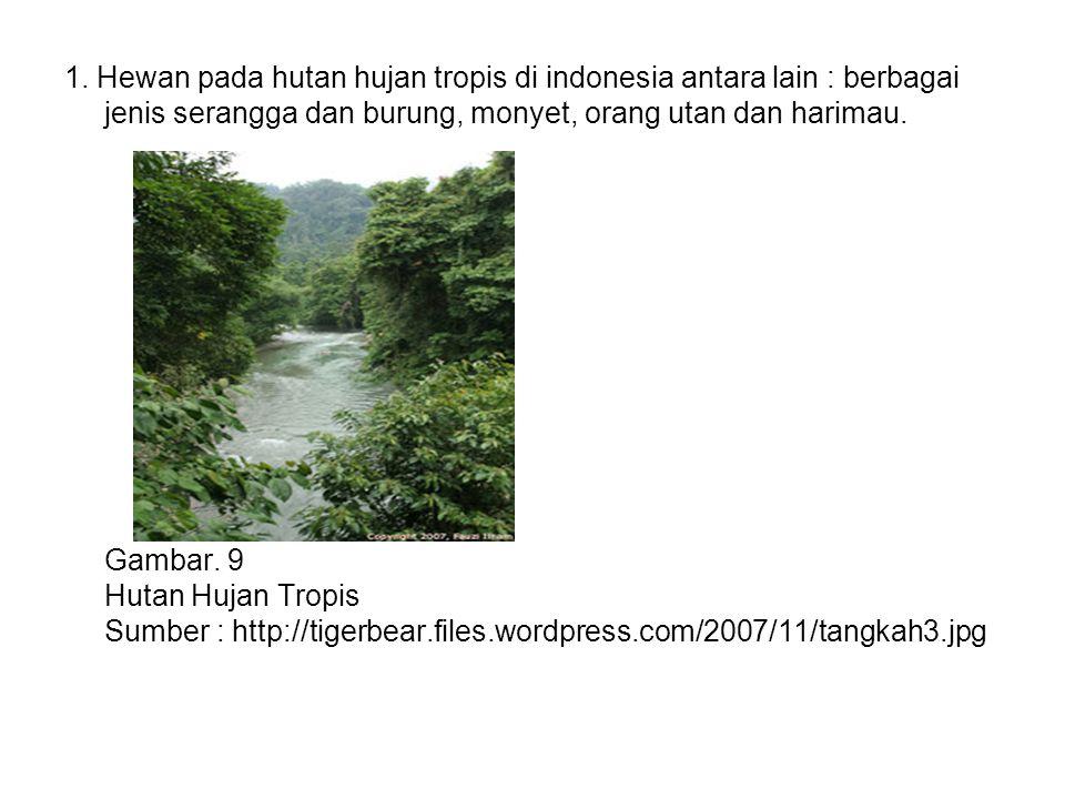 1. Hewan pada hutan hujan tropis di indonesia antara lain : berbagai jenis serangga dan burung, monyet, orang utan dan harimau.