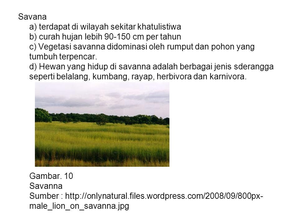 Savana a) terdapat di wilayah sekitar khatulistiwa b) curah hujan lebih 90-150 cm per tahun c) Vegetasi savanna didominasi oleh rumput dan pohon yang tumbuh terpencar.
