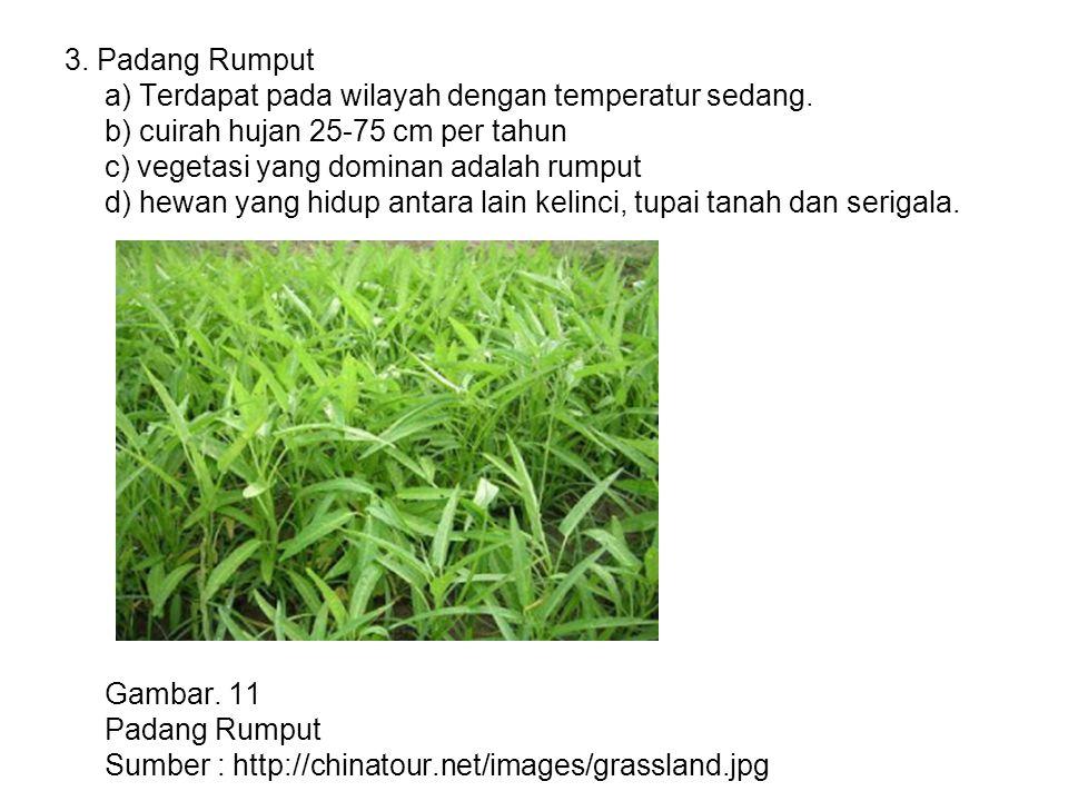 3. Padang Rumput a) Terdapat pada wilayah dengan temperatur sedang