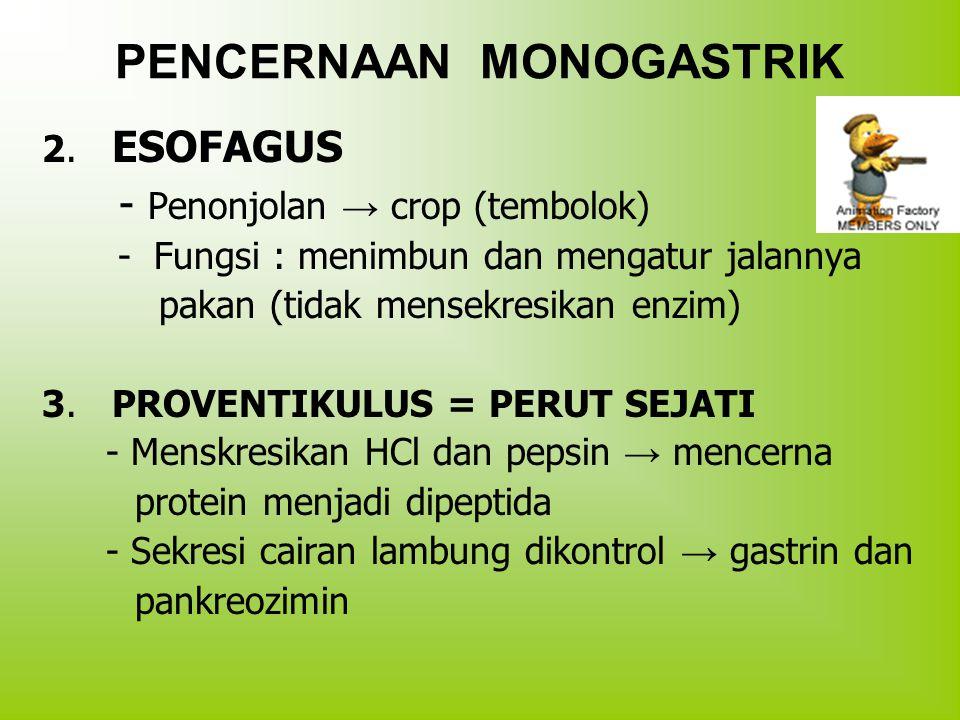 PENCERNAAN MONOGASTRIK