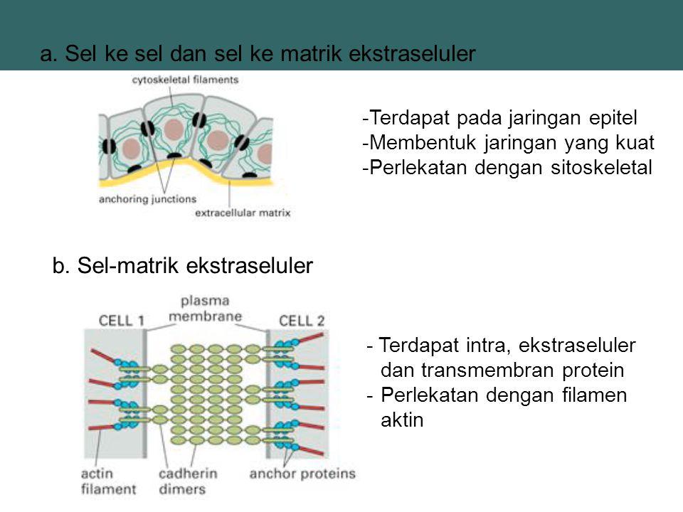 a. Sel ke sel dan sel ke matrik ekstraseluler