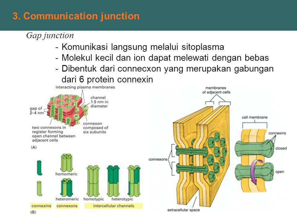 3. Communication junction
