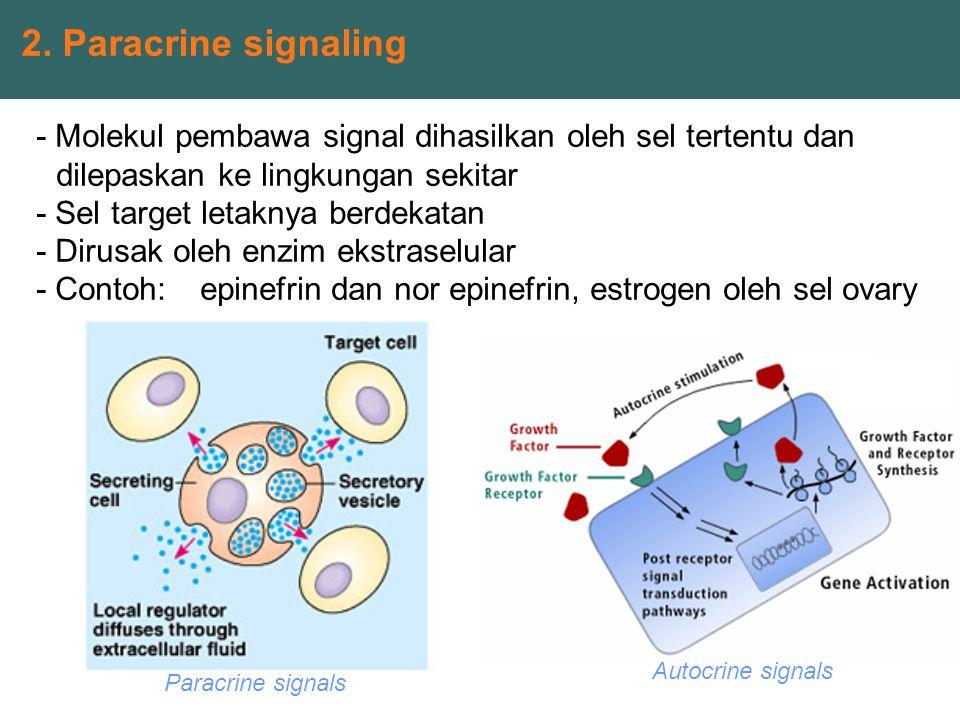 2. Paracrine signaling - Molekul pembawa signal dihasilkan oleh sel tertentu dan dilepaskan ke lingkungan sekitar.