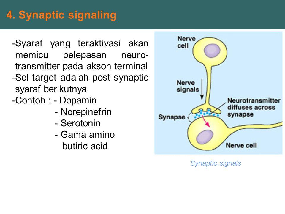 4. Synaptic signaling Syaraf yang teraktivasi akan memicu pelepasan neuro- transmitter pada akson terminal.