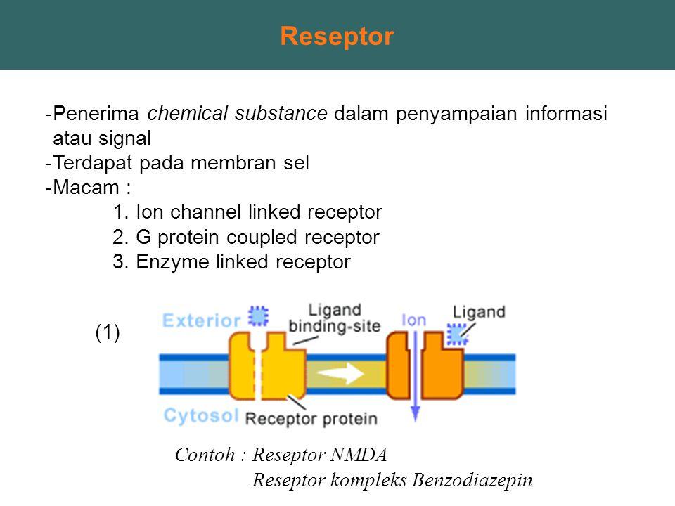 Reseptor Penerima chemical substance dalam penyampaian informasi atau signal. Terdapat pada membran sel.